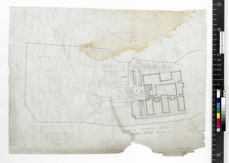 Site plan showing position of trees.
