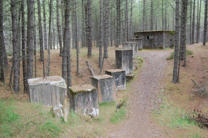 A pillbox and anti-tank blocks located within Lossie Forest