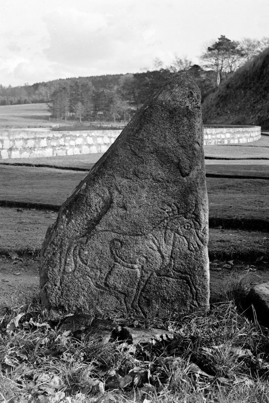 Pictish symbol stone no.4, bearing figure of horse. Original negative captioned: 'Sculptured Stone in Inverurie Churchyard'.