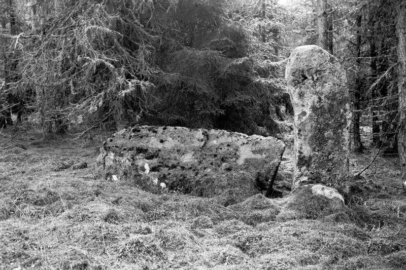 Recumbent stone and flanker. Negative captioned 'Stone Circle in wood at Whitehills near Monymusk. Recumbent Stone and Pillars viewed from centre of circle, looking South. 1902'.