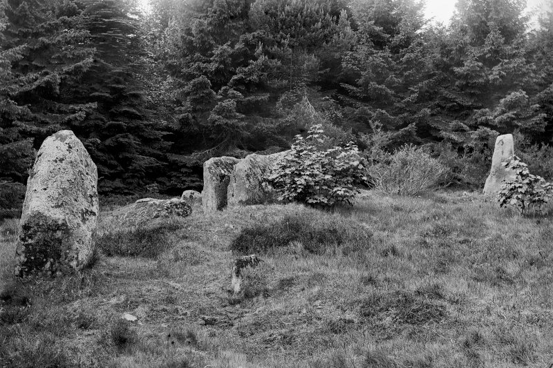 View from the interior of the circle, looking towards recumbent stone. Negative captioned 'Stone Circle in Wood near Daviot June 1901'.