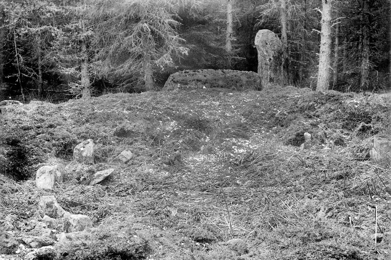View of recumbent and flanker. Print card captioned: 'Also called Tillyfourie.' Negative, captioned 'Stone Circle at Whitehills, Monymusk, March 1902 / Stone Circle in wood near Whitehills, Monymusk, showing Recumbent Stone, Pillars, Ridge & Stone Setting'.