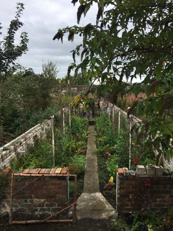 Photo looking north from above interwar (?) greenhouse, 17 September 2017. This greenhouse does not appear on the OS 1914 map, but does appear on the OS 1946/7 map.