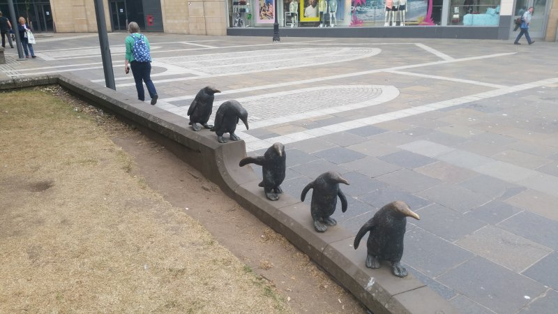 This is another view of the Penguins taken from another angle.