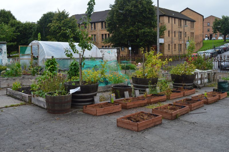 Community Garden set-up by the West of Scotland Regional Equality Council (WSREC).  Plants, herbs, fruit, and veg are grown, and WSREC regularly delivers gardening sessions here.