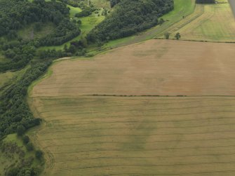 Oblique aerial view of the cropmarks of the palisaded enclosure and round house at Windy Mains, taken from the NE.