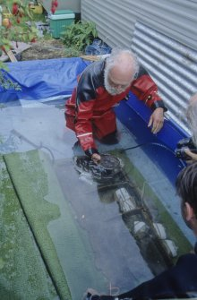 The remains of a binnacle (compass housing) (DP96/004) in temporary wet storage. Dr Colin Martin is holding the base of a compass that was found inside it. (Edward Martin)