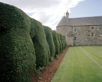 Detail of yew topiary looking towards the east wing of the house.