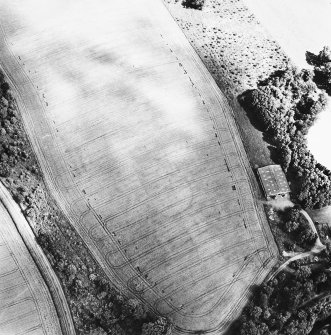 Linthill, oblique aerial view taken from the SW, centred on the cropmarks of an enclosure and rig.
