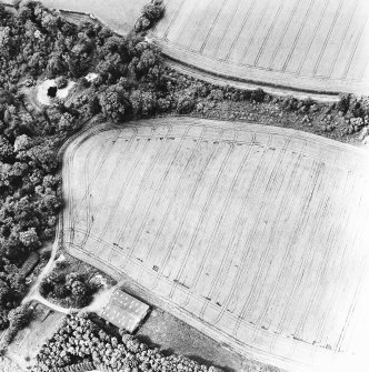 Linthill, oblique aerial view taken from the SE, centred on the cropmarks of an enclosure and rig.