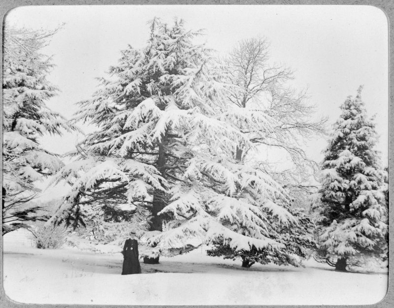 View of woman in front of snow covered tree, Inchrye Abbey