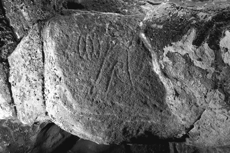 Detail of triple-oval and flower Pictish symbols on ceiling of entrance to Sculptor's Cave, Covesea (B&W)