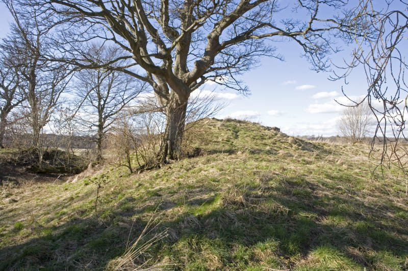 View of mound on the NW corner of Henry VIII fort with external ditch to W