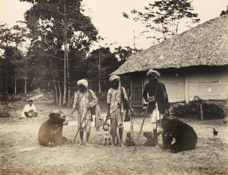 View of three men with two bears, a goat and two monkeys, possibly in India Titled: '[Samasha Gallah Dupai?]'