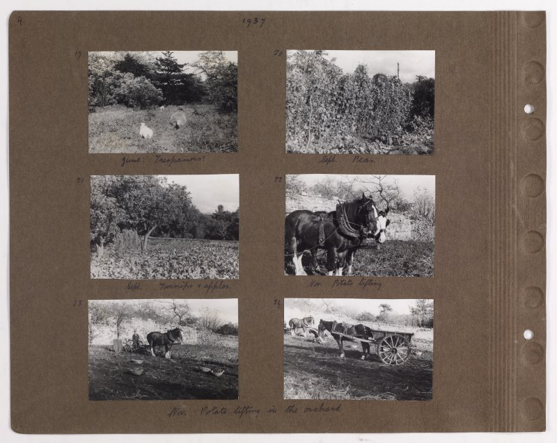 Six album photographs showing views of farming including vegetable gardens and orchard. Page titled: '1937' PHOTOGRAPH ALBUM NO.145: ADDISTOUN
