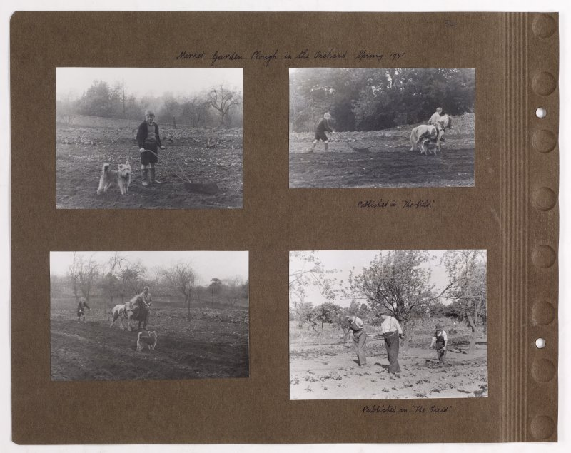 Four album photographs showing the Orchard at Addistoun House, two of the photographs were published in 'The Field'. Page titled: 'Market Garden Plough in the Orchard. Spring 1941' PHOTOGRAPH ALBUM NO.145: ADDISTOUN