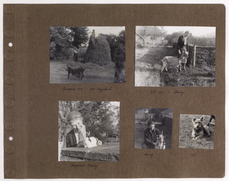 Five album photographs showing animals and haystack at Addistoun House. PHOTOGRAPH ALBUM NO.145: ADDISTOUN