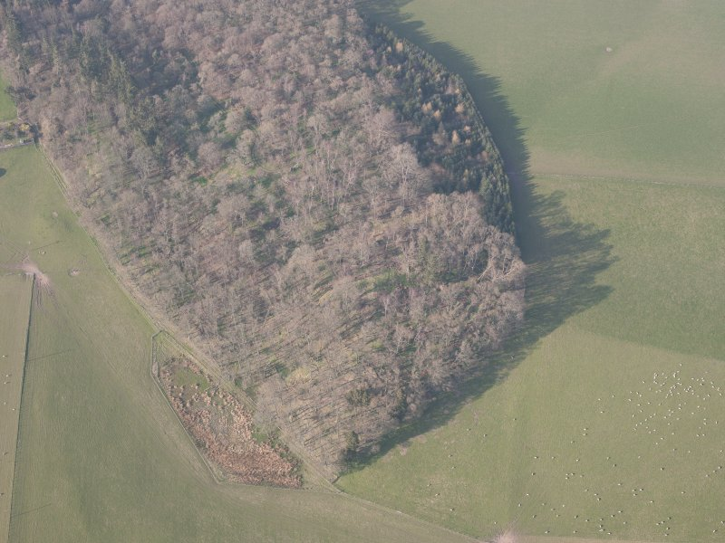 Oblique aerial view of Jackschairs Wood, looking N.