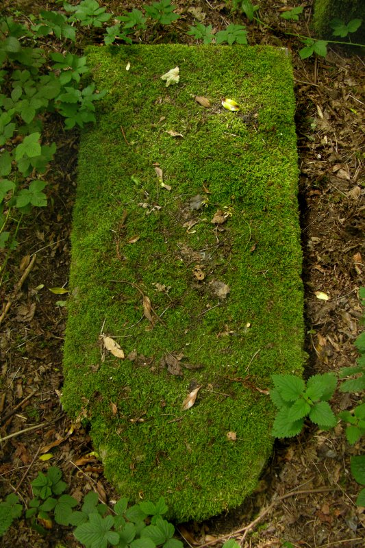 View of toppled gravestone covered in moss, Newington Cemetery, Edinburgh.