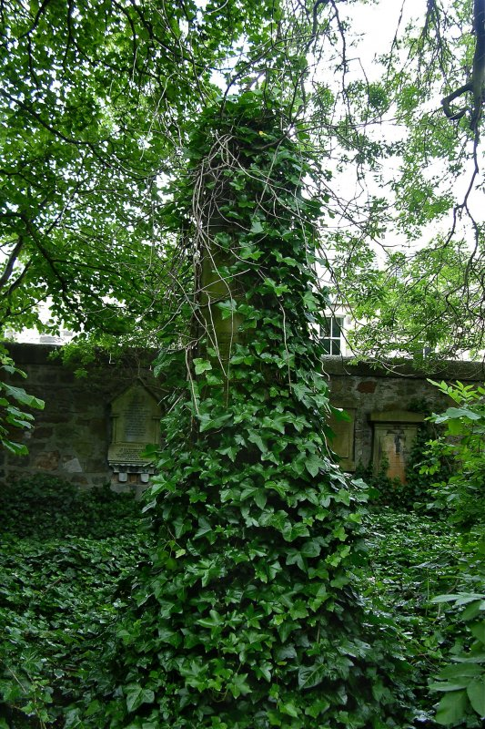 View of obelisk-style gravestone covered in ivy. From east wall of cemetery, next to Dalkeith Road, Newington Cemetery, Edinburgh.