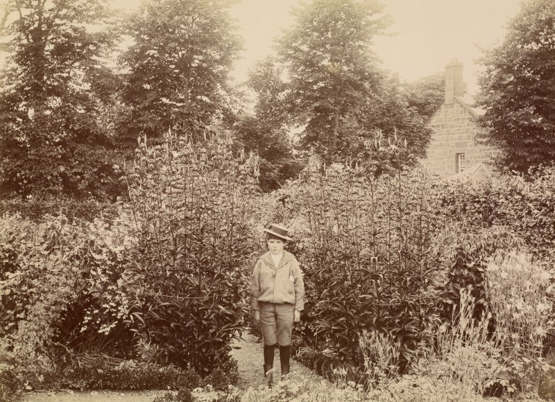 Dalmore House gardens. From family album of Mr K Montgomerie. Survey of Private Collection