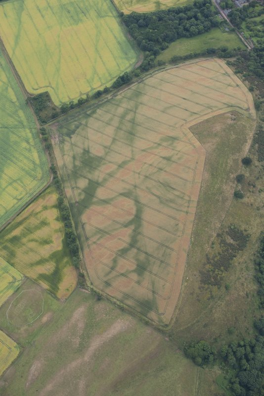 Oblique aerial view of the cropmarks of the forts on Doon Hill, looking SW.
