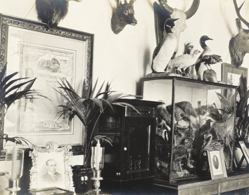 Interior view showing stuffed birds and ornaments, Balmacaan House. Titled: 'Another view from the top of the stairs'.  PHOTOGRAPH ALBUM No;32: BALMACAAN ALBUM.