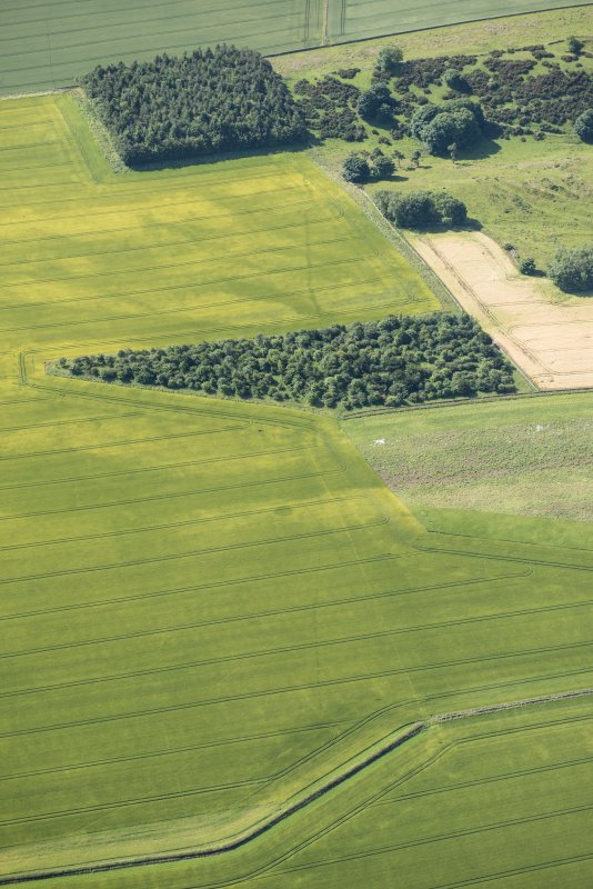Oblique aerial view of the cropmarks of the ring ditch houses and the pit-defined boundary, looking S.