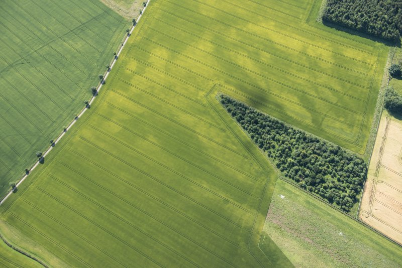 Oblique aerial view of the cropmarks of the ring ditch houses and the pit-defined boundary, looking SE.