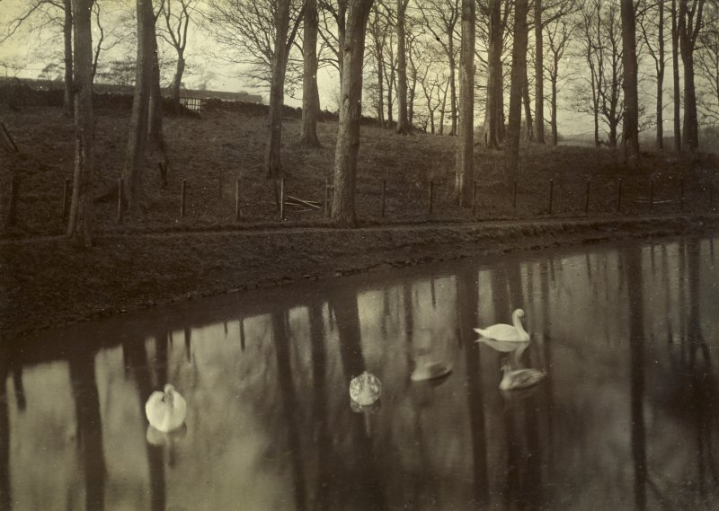 View of pond with swans, The Peel, Busby