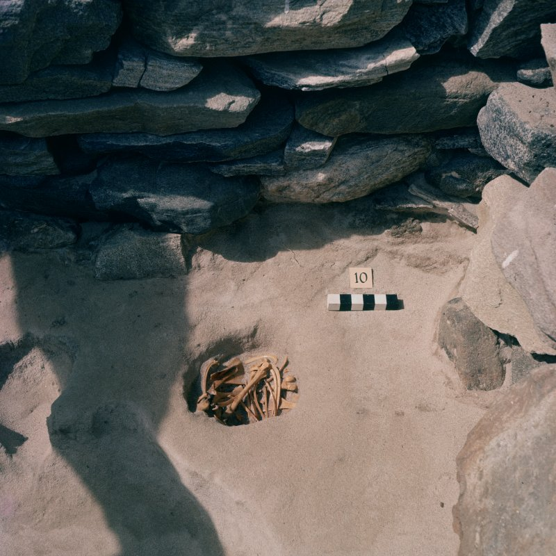 Excavation photograph.  Cell 10 Pit 2 with sheep burial.