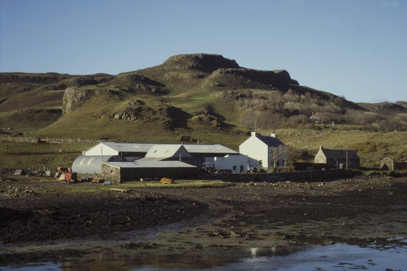 Scanned image of Canna.