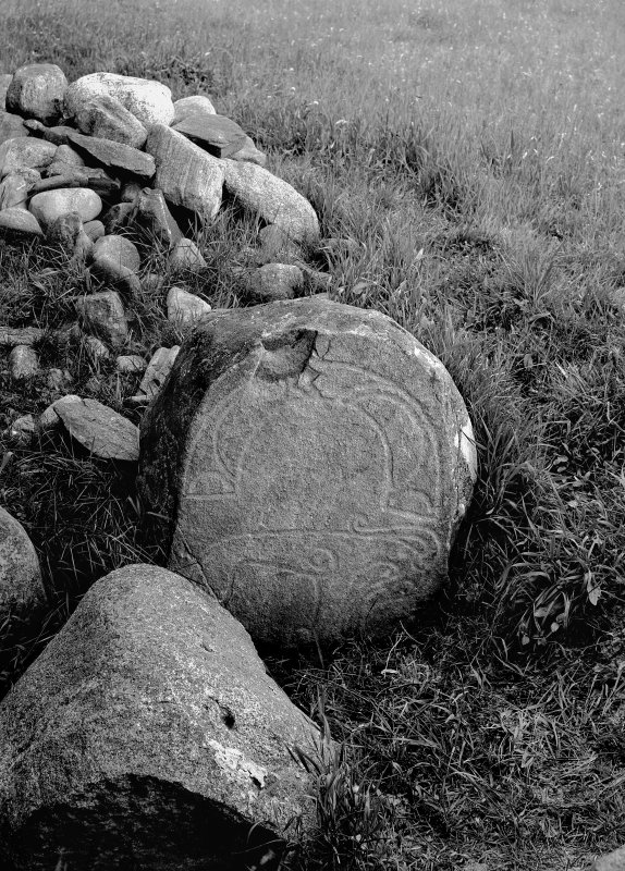 Pictish symbol stone no.1. Original negative captioned 'Sculptured Stone at Congash, Grantown, Inverness. 1910'.