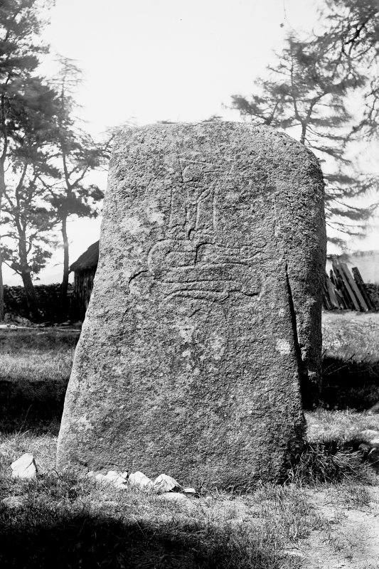 General view of Pictish symbol stone. Original negative captioned: 'Sculptured Stone at Cothill, Craigmyle near Torphins July 1902'.