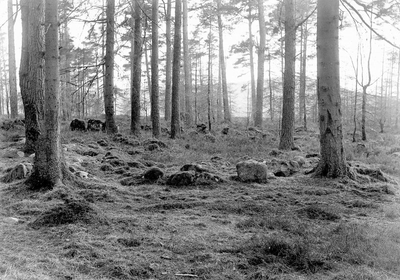 General view of remains of cairn in woodland.