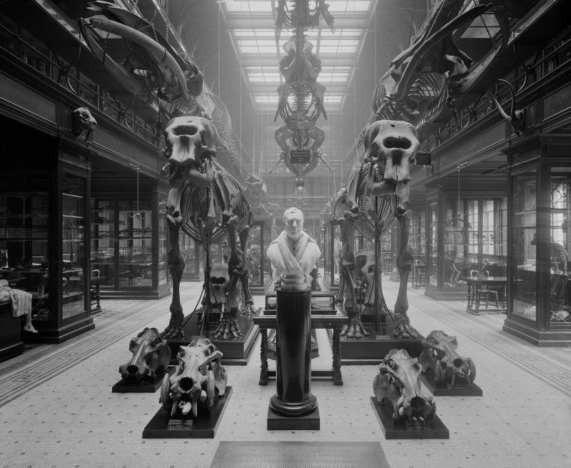 View of exhibition hall in the Medical School at Edinburgh University, Teviot Place, Edinburgh with skeletons of large mammals and a bust of Dr Monro.