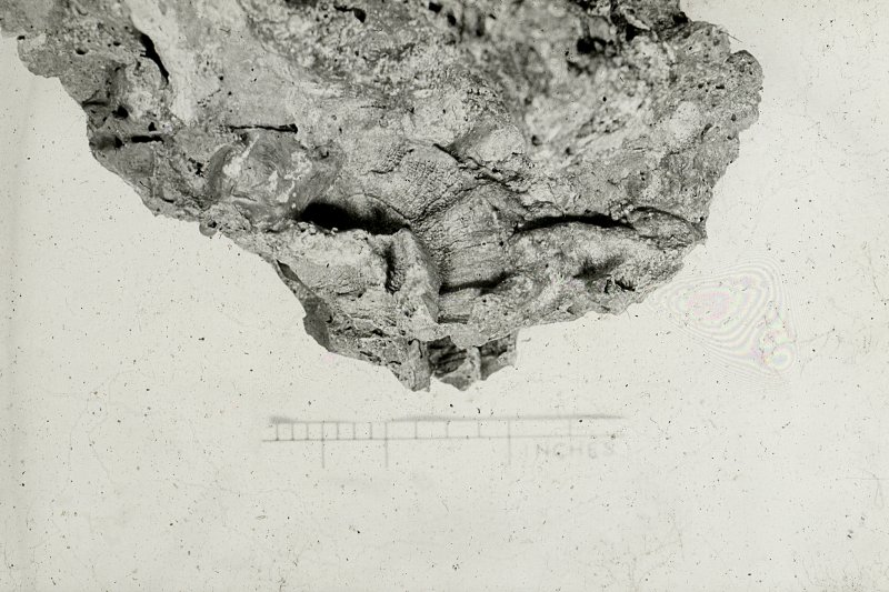 "Copy of black and white slide showing detail of vitrification Dun Deardail, Glen Nevis, Highland. "" Vitrification containing wood casts showing cross section of a log."" NMRS Survey of Private Collection  Digital Image Only"