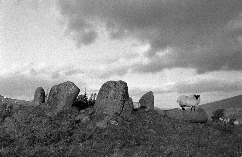 View of stone circle from SE.