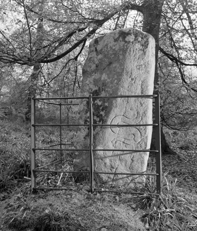 View of reverse of Thornton Pictish cross slab, Hunters Hill.