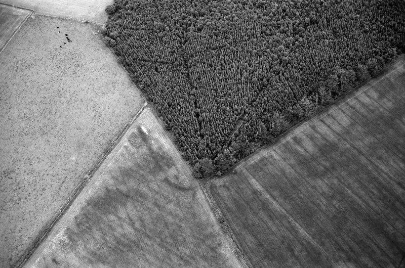 Oblique aerial view centred on the cropmarks of the Roman Temporary Camp at Normandykes, looking to the SSW.