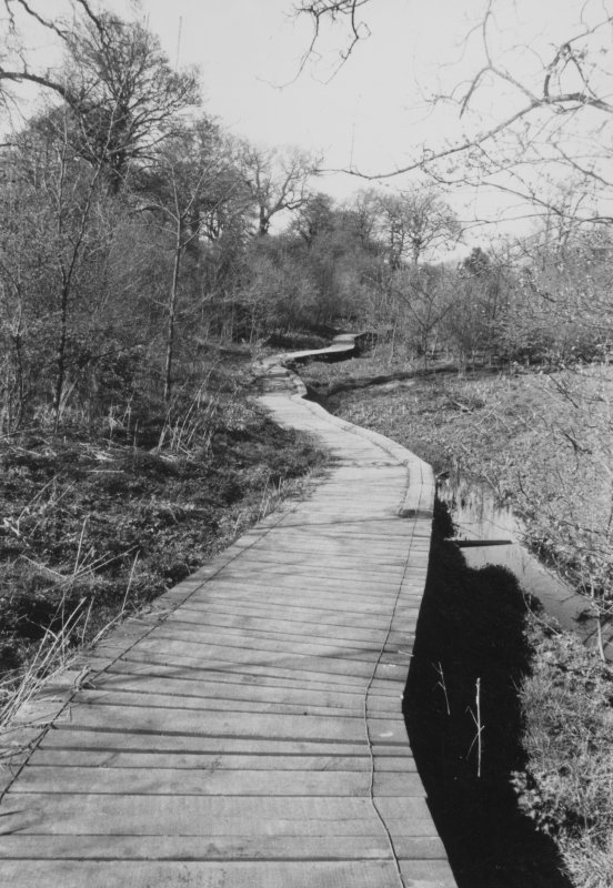 View of boardwalk at Folly Burn.