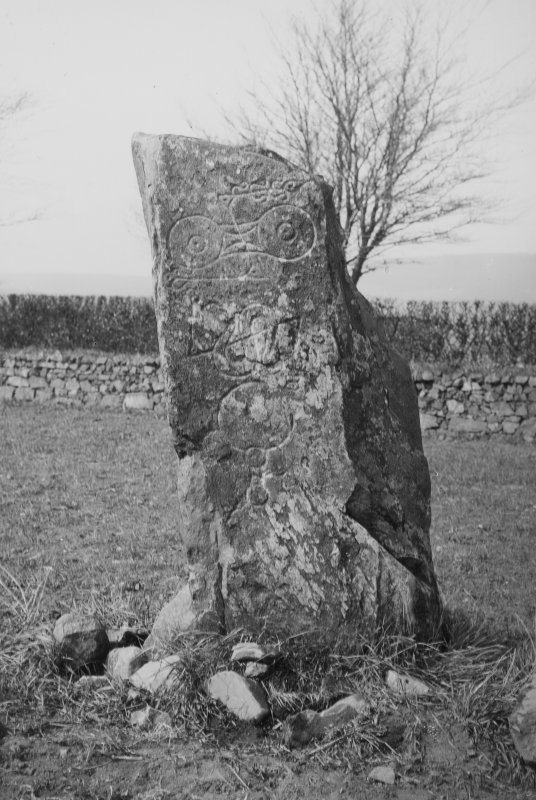 View of the Picardy Stone, Pictish symbol stone, Myreton Farm, Aberdeenshire. Original half-plate glass negative captioned: 'Sculptured Stone at Myreton near INSCH'.