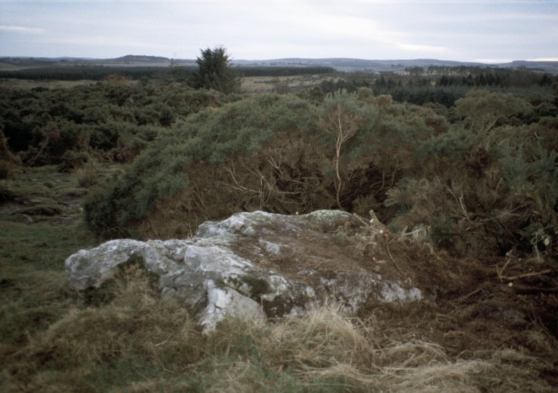 Copy of slide (H 93794cs) of recumbent stone before clearance of vegetation.