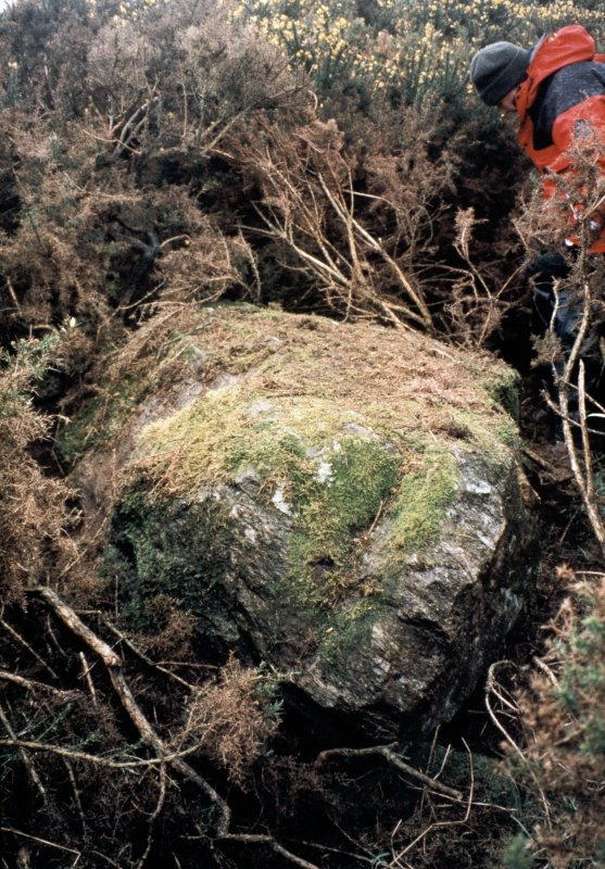 Copy of slide (H 93795cs) of stone 7 before clearance of vegetation.