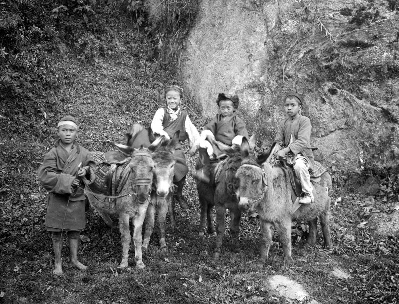 Group of children with donkeys.  Unknown location, possibly in Darjeeling or north Bengal.