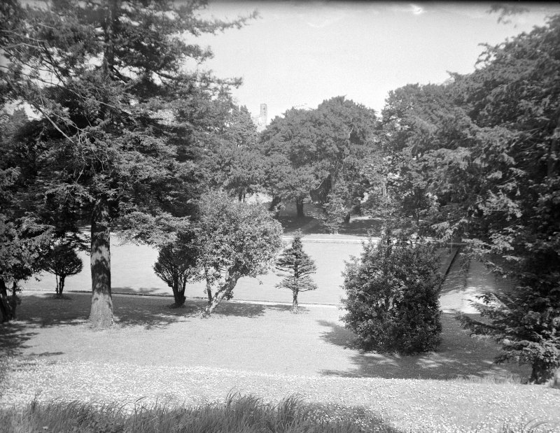 View of lawn and shrubs.
