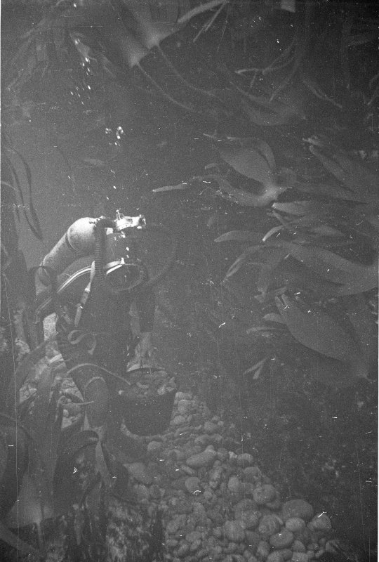 Moving stones by bucket during the excavation of Gulley A. Note the dynamic motion indicated by the waving kelp fronds.