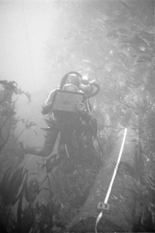An archaeologist on the wreck-site recording in situ a cast-iron gun from which the concretion has been removed. The strong current is revealed by the streaming of the kelp.