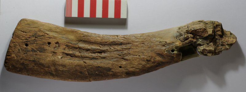 Wooden stock of a Highland sporting musket (HXD 276). Scale in centimetres.