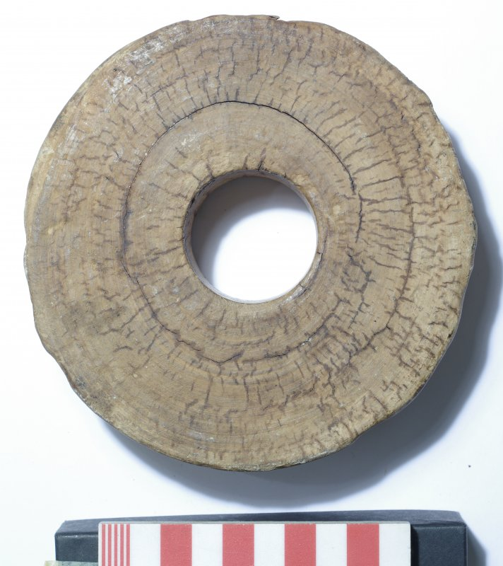 Small hardwood sheave (pulley-wheel), cut from the heartwood centre across the grain. Scale in centimetres.
